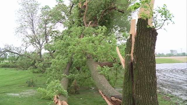 The Schippers say they lost Ash, Elm, Oak and Evergreen trees in Wednesday's storm.